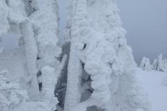 Zimní okolí Černé Hory