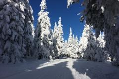 Zimní okolí Černá Hora